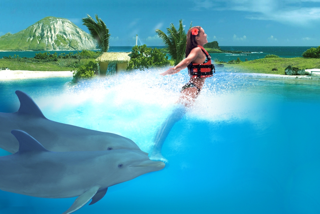 how to swim with dolphins