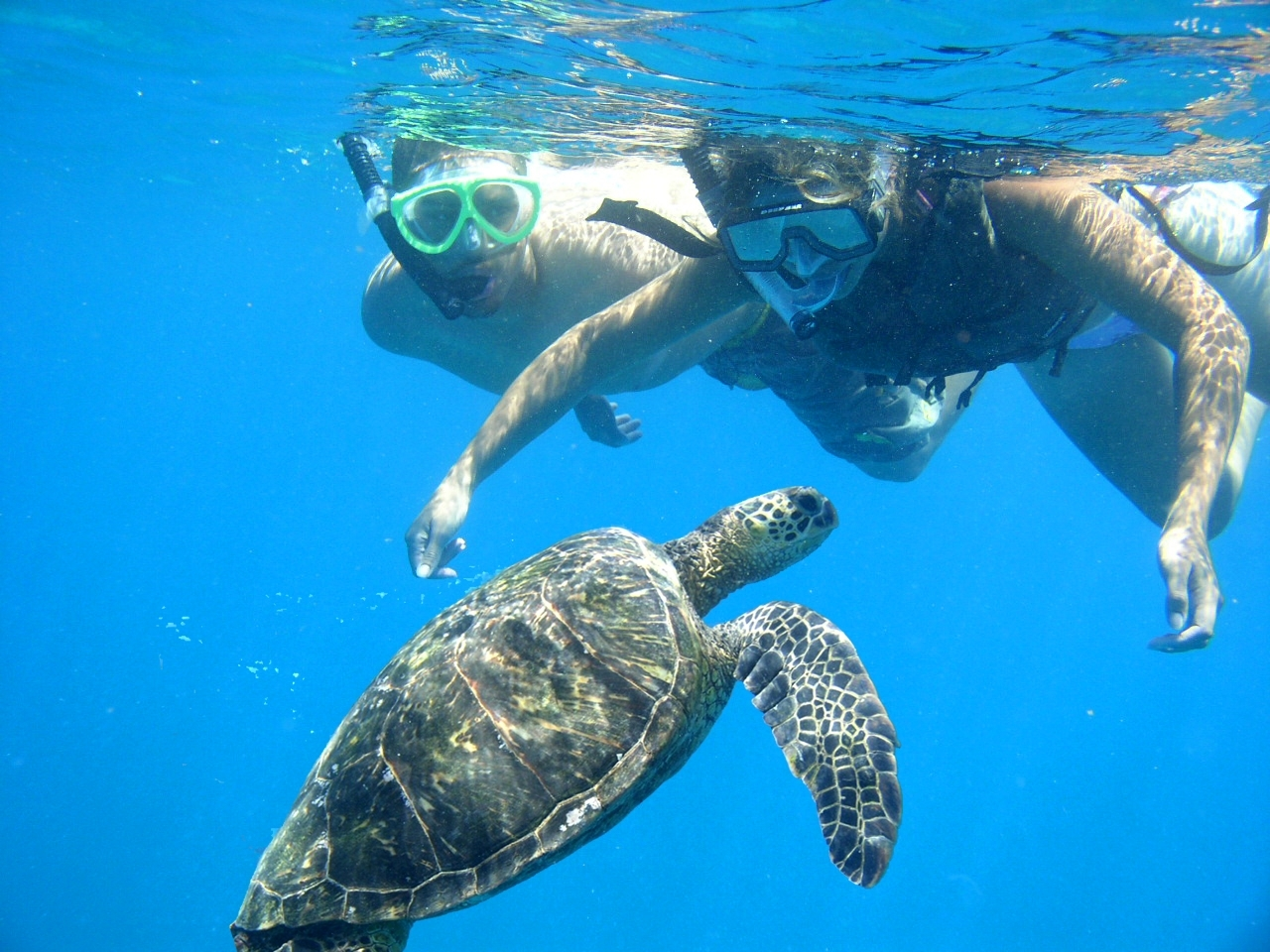 Hawaii Snorkeling Tour Oahu