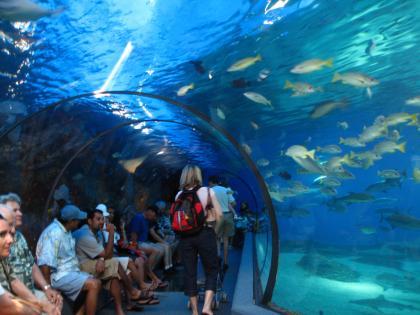 Maui Ocean Center | Maui Now Events