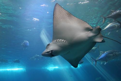 Maui Ocean Center Aquarium | Maui Aquarium Tickets