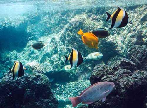 Kaanapali Snorkeling Tours