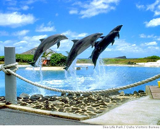 Dolphin Shows and kolyaski.ml