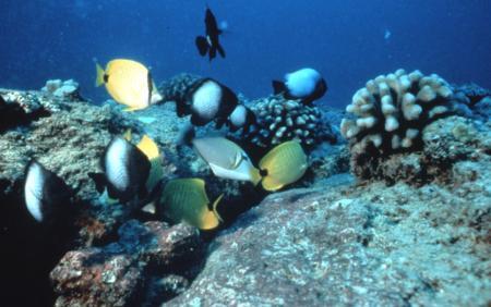 Atlantis Submarine Adventure, Lahaina - Maui
