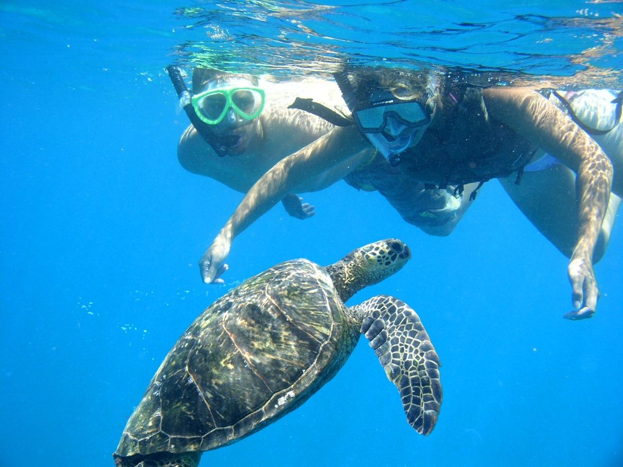 Sea Fun Shoreline Snorkel Kauai   Aloha Kauai Snorkeling
