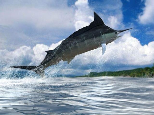 d9b84d0c45af Maui Sportfishing Share Tours