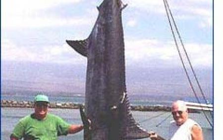 5c5a71d2946d Maui Deep Sea Fishing - Share